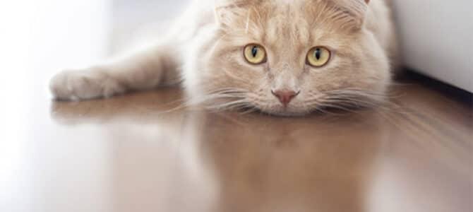 Selidba mačke u novi dom